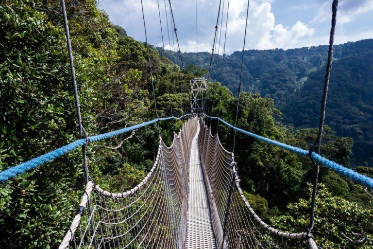 Rwanda Nyungwe Forest National Park 1035464173